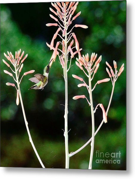 Hummingbird Emerald Green - Hummer Floats In Floral Glory Metal Print by Wayne Nielsen