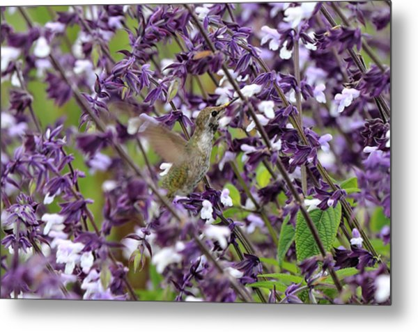 Hummingbird Flowers Metal Print