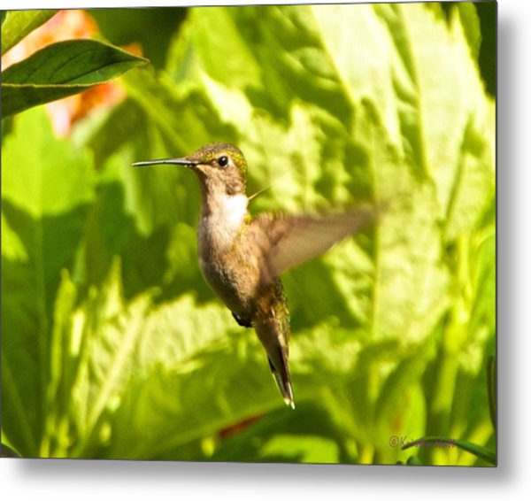 Hummingbird Highlighted By The Sun Metal Print