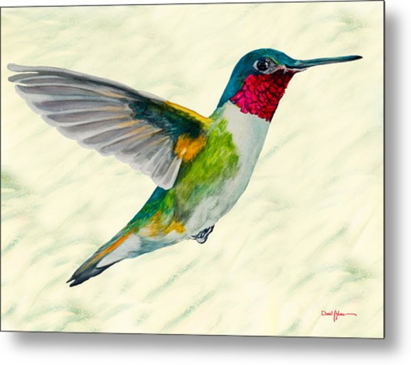Da103 Broadtail Hummingbird Daniel Adams Metal Print