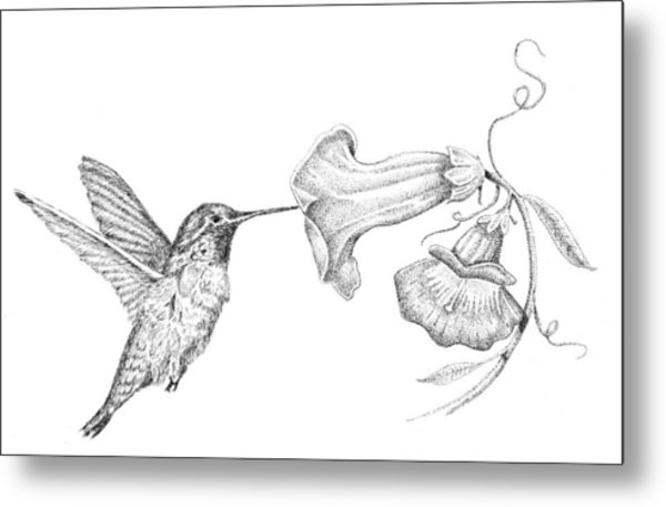 Hummingbird Metal Print by Kyle Peron
