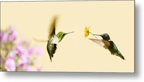 Hummingbird Love. Photograph by Kelly Nelson