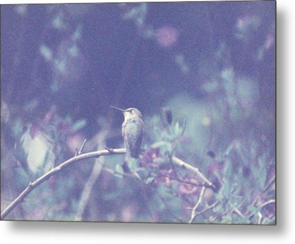 Hummingbird On Potato Vine Metal Print