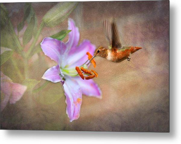 Hummingbird Sweets Metal Print