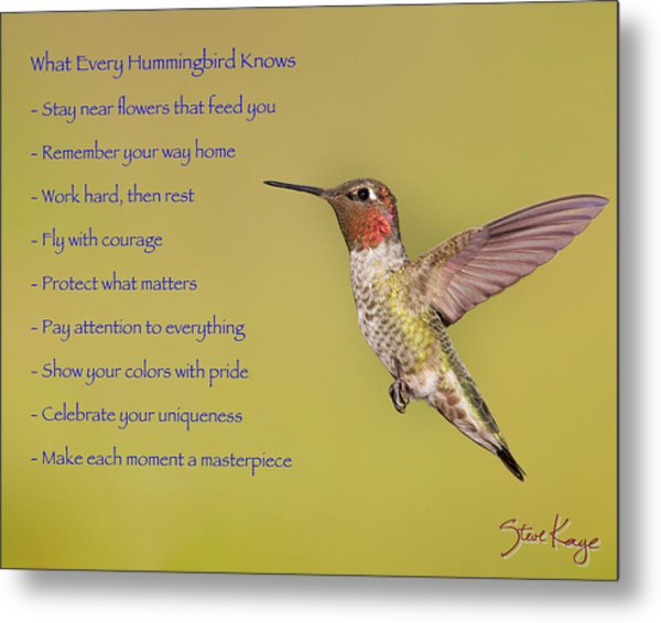 Hummingbird Wisdom Photograph by Steve Kaye