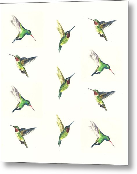 Hummingbirds Number 2 Metal Print
