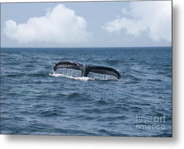 Humpback Whale Fin Metal Print