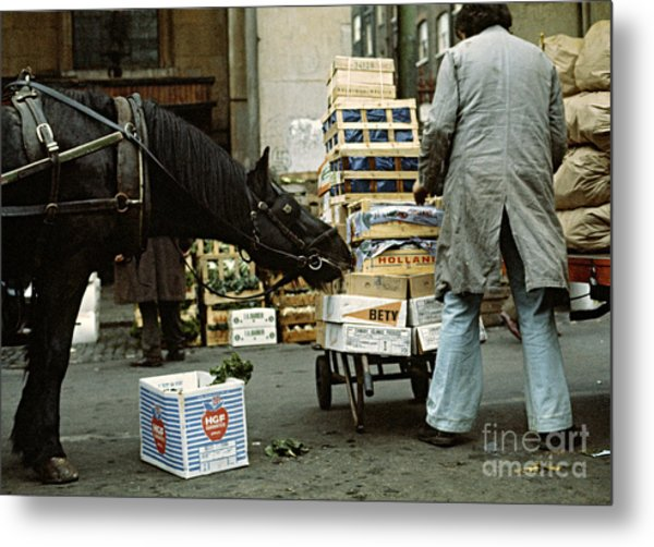 Hungry Horse Metal Print by David Davies