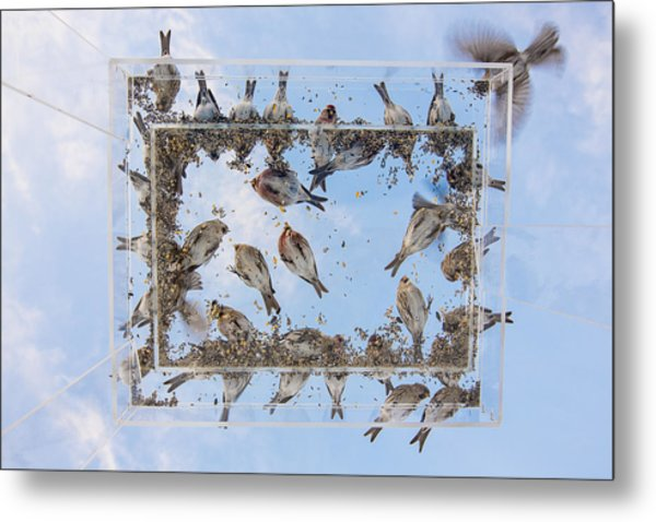 Hungry Little Birds Metal Print