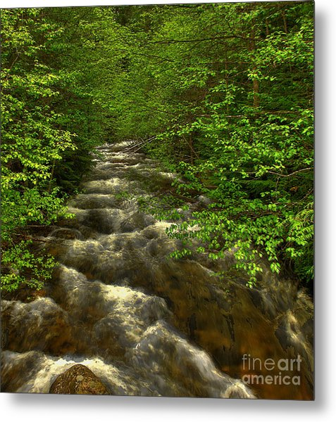 Hunt Creek Foilage Metal Print