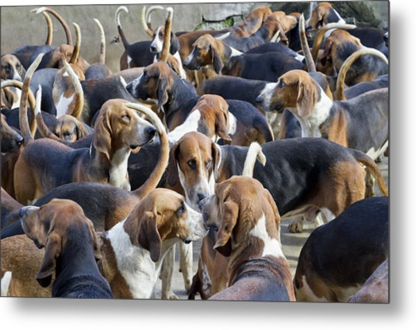 Hunter Hounds Dogs Background Metal Print