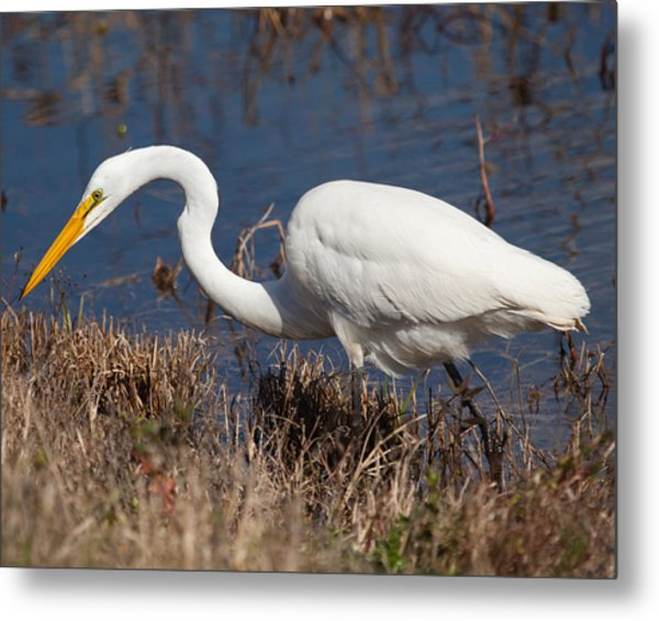 Hunting For Lunch Metal Print