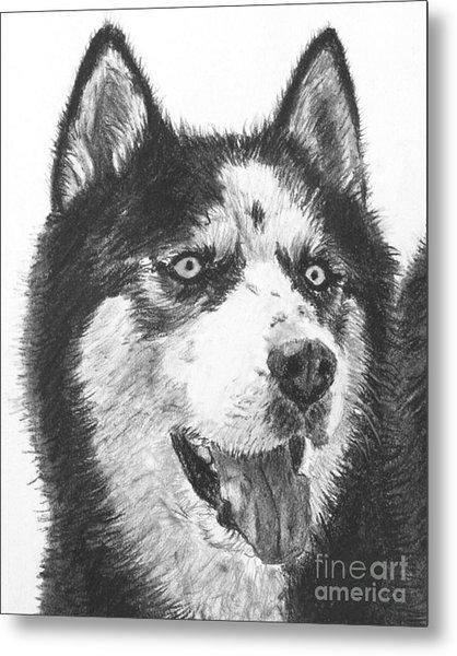 Husky Drawing Metal Print