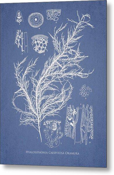 Hyalosiphonia Caespitosa Okamura Metal Print