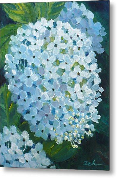 Hydrangea Blossom Metal Print