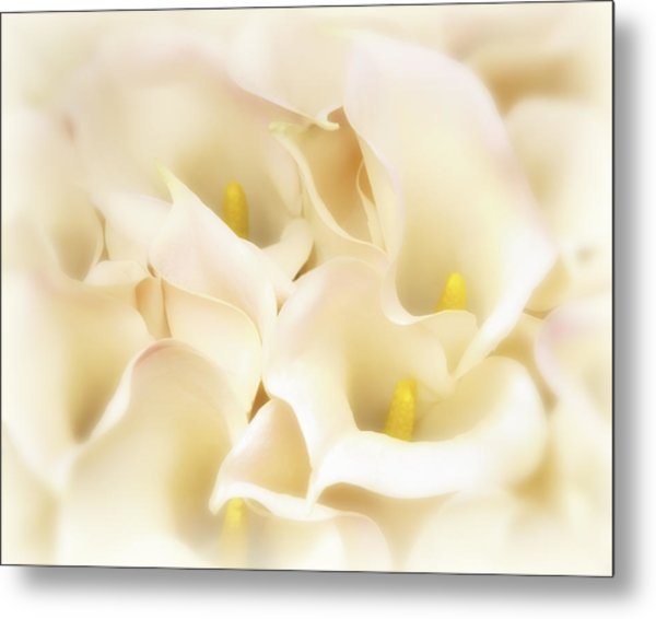 I Dreamed Of Calla Lilies Metal Print