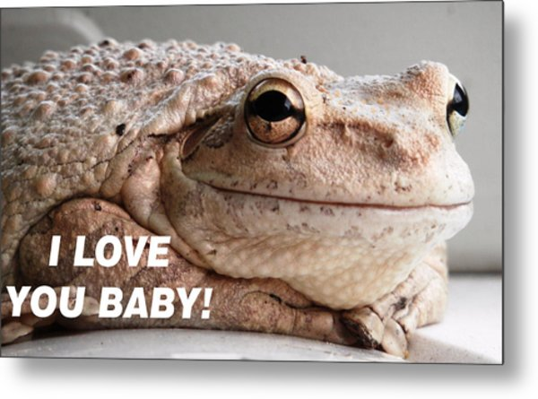 Frog Declaration Of Love Metal Print