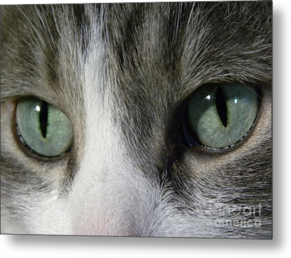 I Only Have Eyes For You Metal Print by Laura Yamada