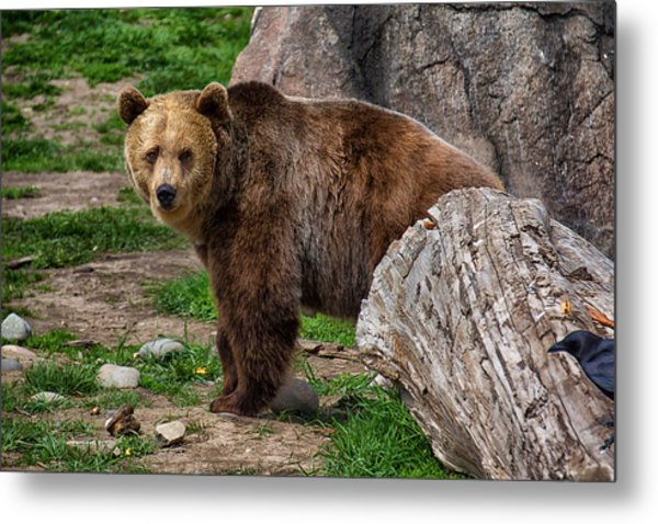 I See A Grizzly Bear Metal Print