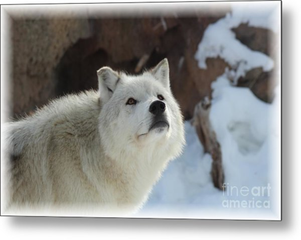 I See You Metal Print by Brenda Henley