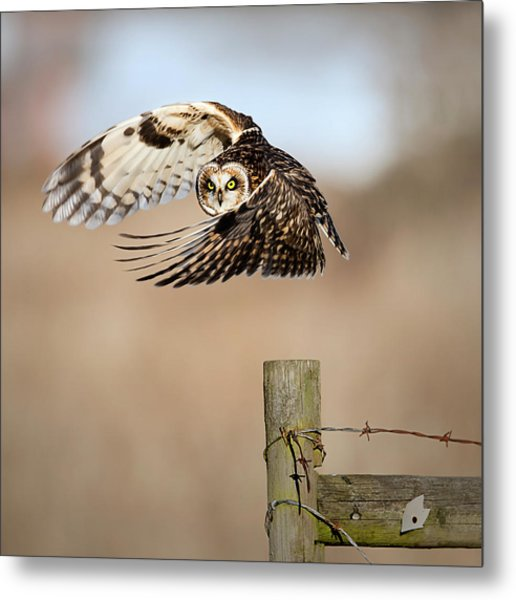 I See You! Metal Print by Fion Wong
