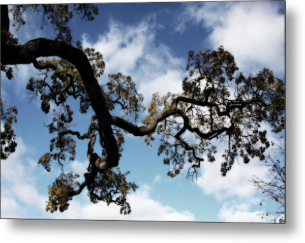 I Touch The Sky Metal Print