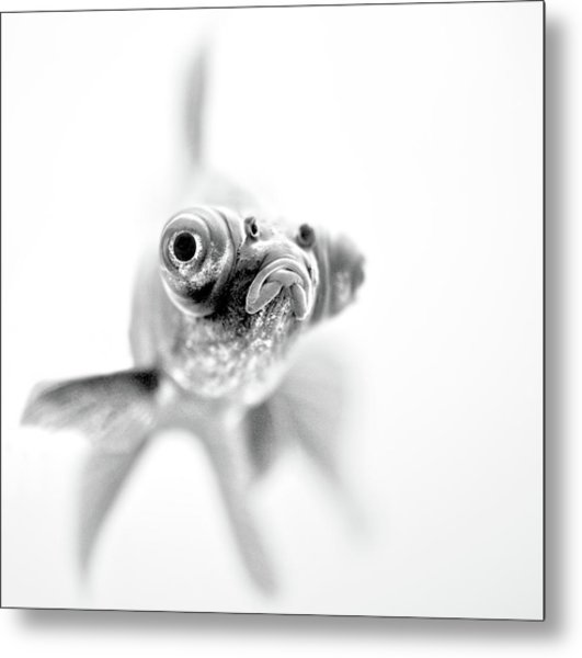 I'm Ready For My Close Up... Metal Print