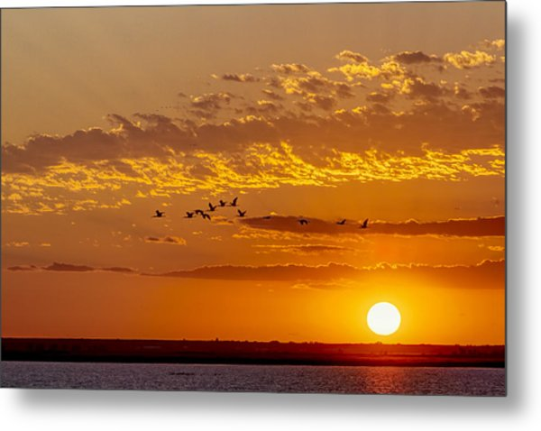 Metal Print featuring the photograph Ibis Flyover At Sunset by Rob Graham