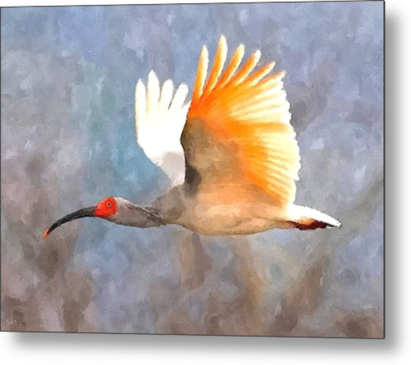 Ibis In Flight Metal Print