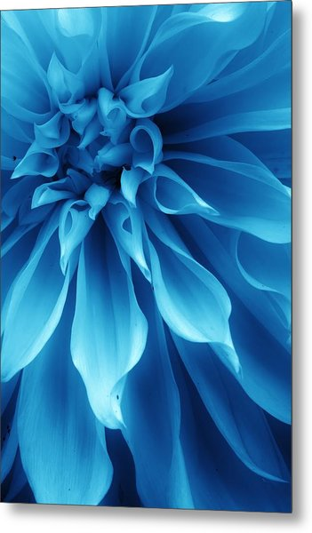 Ice Blue Dahlia Metal Print