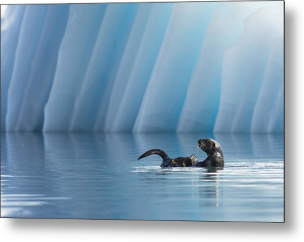 Otter Pop Metal Print