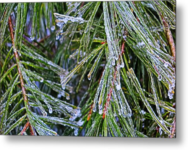 Ice On Pine Needles  Metal Print