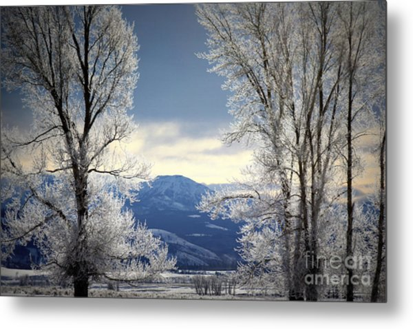 Ice Trees Metal Print