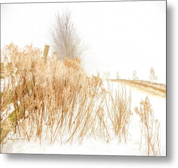 Iced Goldenrod At Fields Edge - Artistic Metal Print