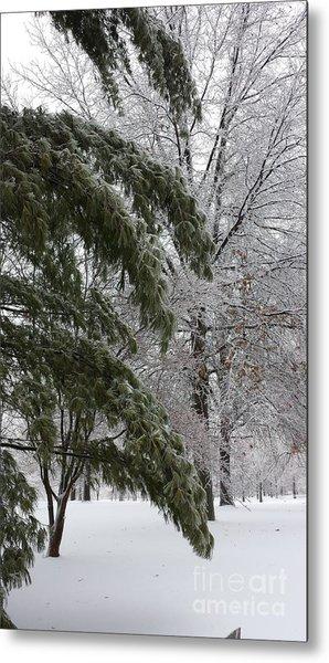 Iced Trees Metal Print