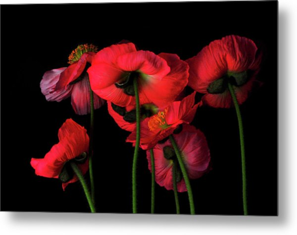 Icelandic Poppies - The View From Down Metal Print