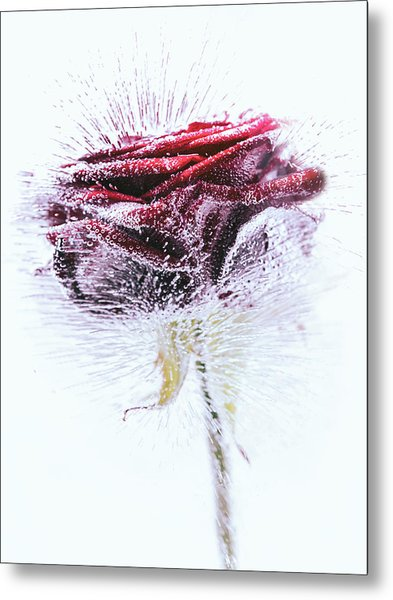 Icerose Metal Print
