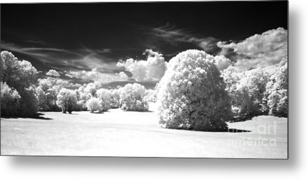 If  1 Metal Print by Alan Russo