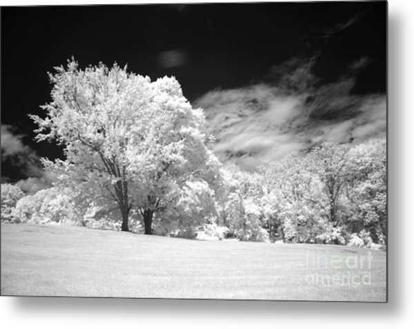 If 3 Metal Print by Alan Russo