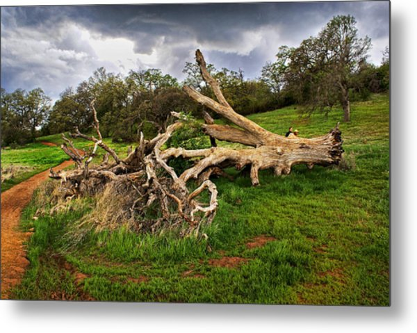 If Trees Could Talk Metal Print