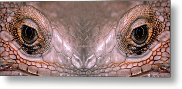 Iguana Eyes Metal Print