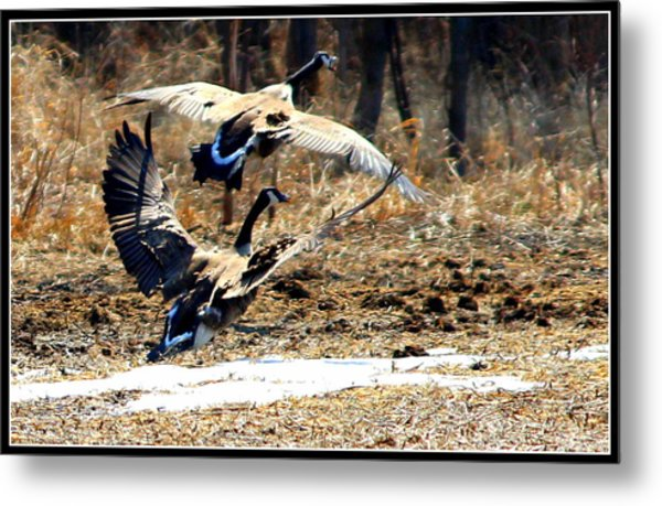 I'll Be Your Wing Man Metal Print by Sheila Werth