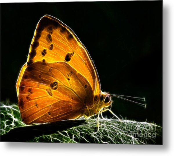 Illuminated Butterfly Metal Print