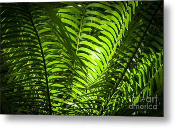 Illuminated Jungle Fern Metal Print