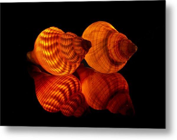 Illuminated Shells Metal Print