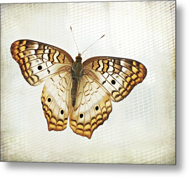 Illuminated Wings Metal Print