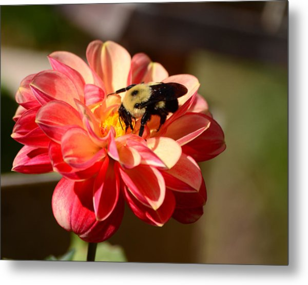 I'm On The New Pollen Diet Metal Print