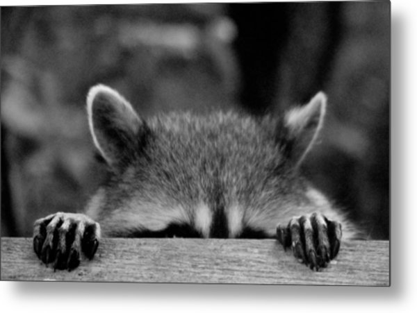 I'm Sure She Can't See Me Metal Print