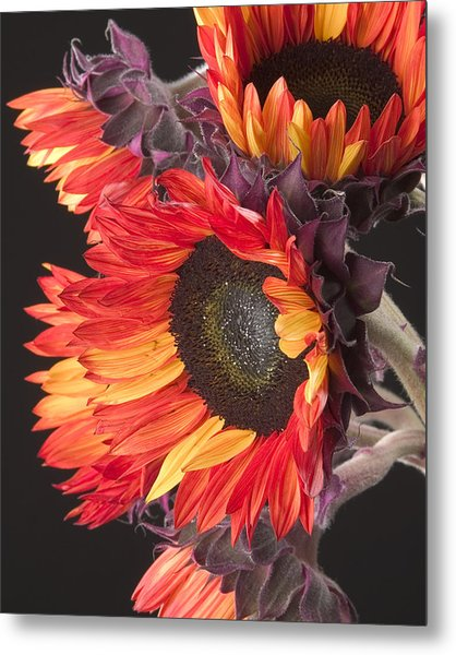 Imagination - Sunflower 01 Metal Print