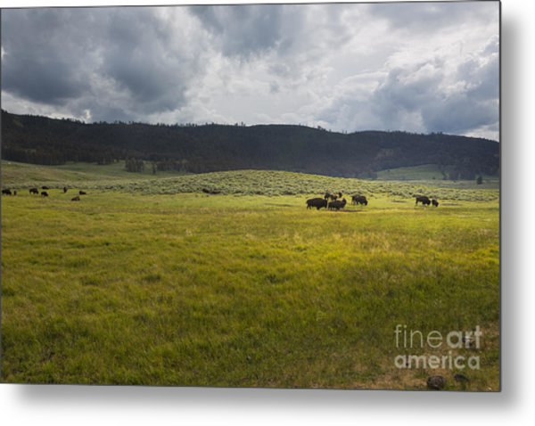 Metal Print featuring the photograph Imagine by Belinda Greb